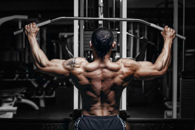 muskelbyggande program